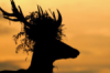 Stag with crown