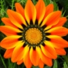 sunshineoflife userpic