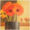 vltavska: orange_flowers
