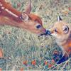 deer&fox