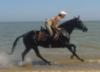 ейск, море, лошадь, я, конь