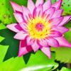 big bright pink flower