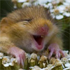 teehee mouse