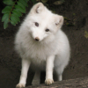 whitefox77 userpic