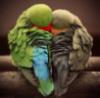 hapami userpic