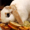 bunny eats