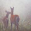 deers in fog