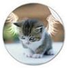 shashigai: catwings