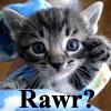 OMG Cute Cat_Macros