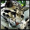svenshinhan userpic