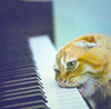 Piano On nom