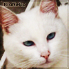 kianeko userpic