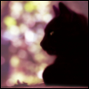black_cat_ansy userpic
