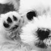 lil puppy