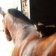 kat@horse