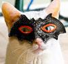 secretcat