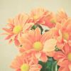 paperflora userpic
