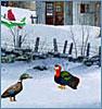 яркие птицы на снегу