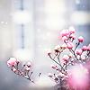 kurenai_tenka: Pink Flower Buds