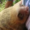 bb sloth ;~;