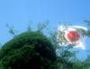 fukushima_1 userpic