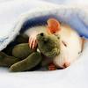 Melissa aka Erin: ratty rat cute