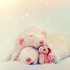 Manu: rats cuddling
