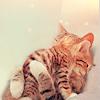 Manu: cuddling cats
