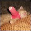 kitten cast