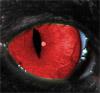 jarvis eye