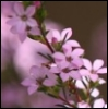 elka78: spring