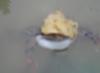 oblako_super: под зонтиком