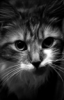 sharp_toothy userpic