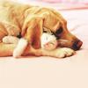 Dyani: animals-dog&cat