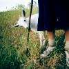 cowseatglass userpic