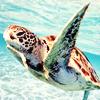 stormbound.dw.org: stock - turtle