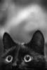 vlada_velesova userpic