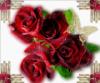 love_natalia userpic