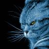 пандорианский кот