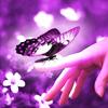deanshot: Butterfly