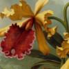 lookcolor userpic