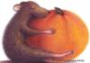 voskresla userpic