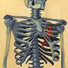 skeleton, artsy, bones