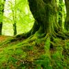 Spring - trees