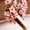 Люда: цветы_нежность