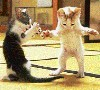 miwahni: Cats Dance
