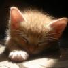 cat: sunbeam