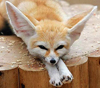 Kitsune [userpic]