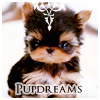 blossomdreams: Pupdreams icon