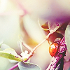 splendorbug userpic